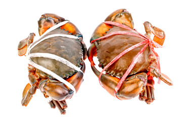 black crab in isolated on white background
