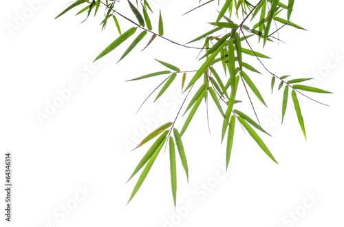 In de dag Bamboe bamboo leaves isolated on white background