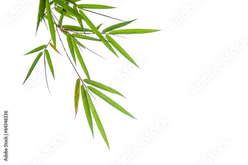 Foto op Canvas Bamboo bamboo leaves isolated on white background