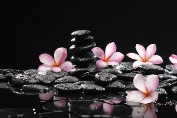 Frangipani with zen stone for Spa concept