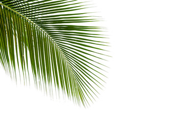 coconut leaves frame isolated on white background, clipping path