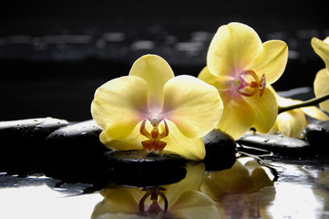 spa concept –yellow branch orchid with wet background