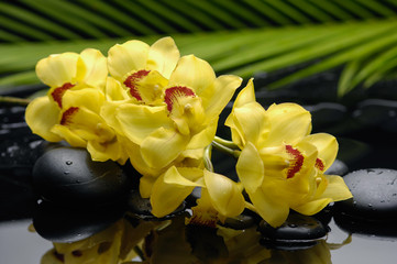 Branch yellow orchid and stones with green leaf