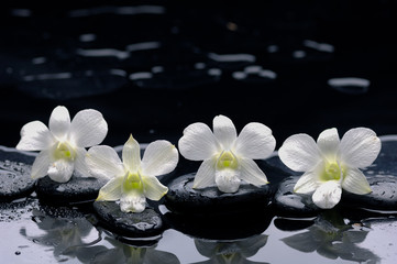four white orchid with stones and wet background