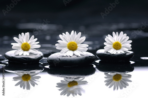 Gerbera (african daisy) with therapy stones reflection