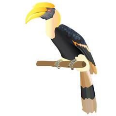 hornbill VECTOR