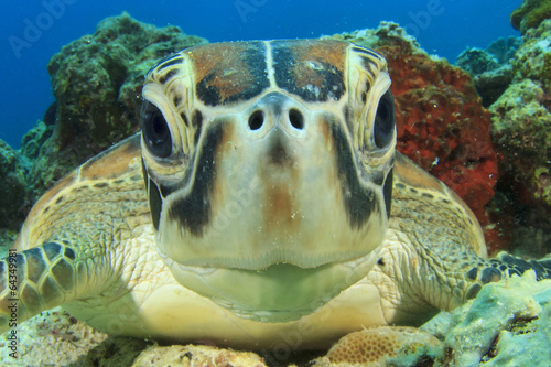 Foto op Aluminium Schildpad Cute Sea Turtle face