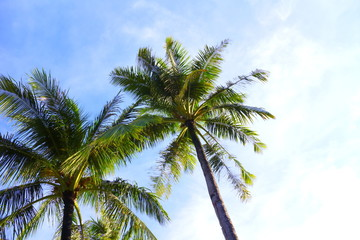 青空と椰子の木 Palm trees and blue sky