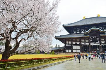 Sakura in Todaiji Temple