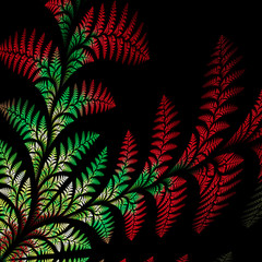 Asymmetrical pattern of the leaves in red and green. On black ba