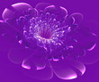 Beautiful purple flower on purple background. Computer generated