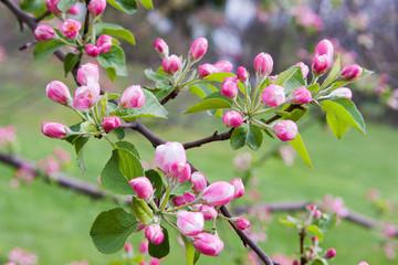 цветы на ветке1