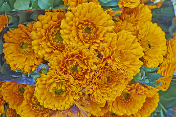 vibrant orange marigold flowers bouquet closeup