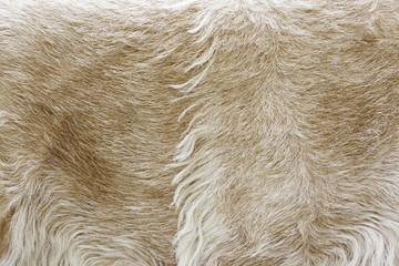 Animal skin with hair