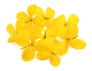 Celandine flowers.