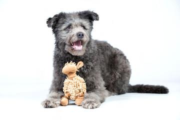 Hund im studio mit Kuscheltier