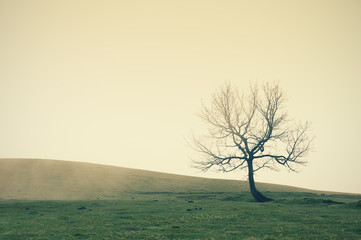 lonely tree with vintage filter effect