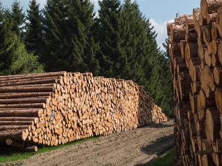 Holzwirtschaft im Harz - Polterplatz mit Baumstämmen