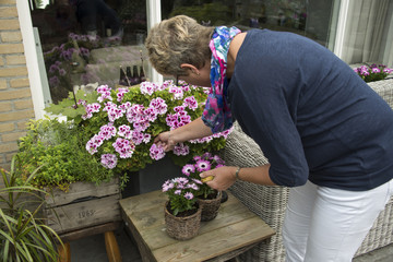 woman removing old flowers