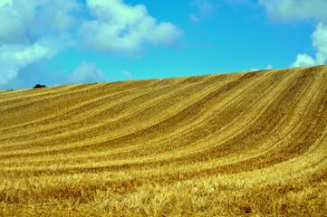 Rastrojos en una colina . Francia