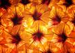 closeup flower