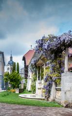 Glycines à Annecy