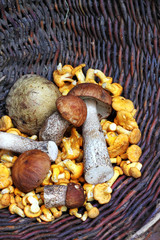 Wild mushrooms in a wicker basket