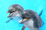 Glad beautiful dolphin smiling in a blue swimming pool water on - 64372393