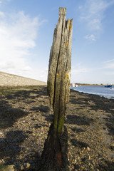 Worn eroded wood post by sea