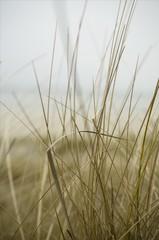 Naturschutzzone mit Dünen
