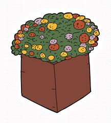 Marigolds in Square Pot