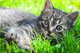 Little kitten in the grass - 64378900