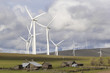 Wind Farm by Cattle Ranch in Washington State - 64379161