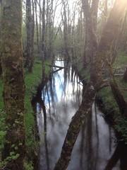 reflection in woodland lake