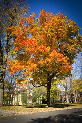 Autumn at Princeton University 2