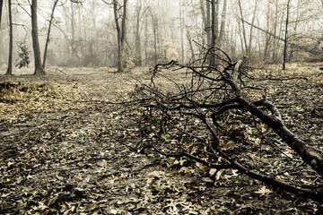Creepy Foggy Woods