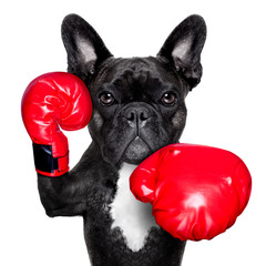 boxing dog