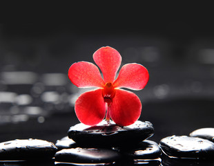 spa scene-macro of red orchid with black stones