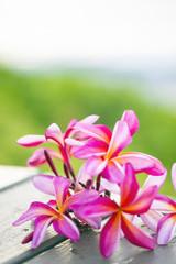 テーブルに置いたピンクのプルメリアと海-3