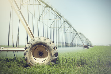 Farm's crop being watered  sprinkler irrigation system