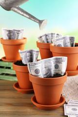 Business concept: growing money in the flowerpots