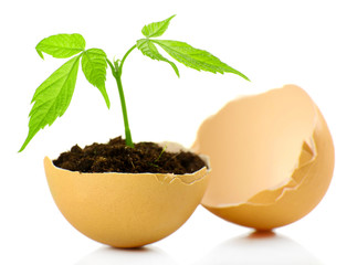 Young green plant growing in eggshell isolated on white