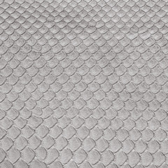 background of dressed gray snake skin closeup