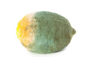 Green moldy lemon citrus fruit isolated. Damaged food.