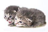 cute newborn kittens close up - 64388922