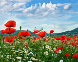 Frühlings-Landschaft in der Pfalz :)