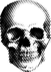 human skull lines