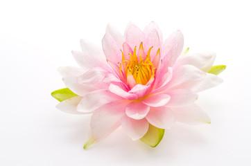 Lotus flower isolated white background