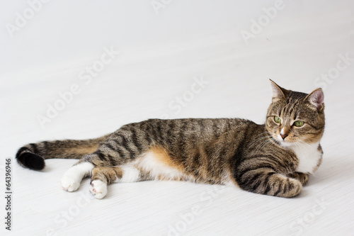 Beautiful cat isolated on white background.