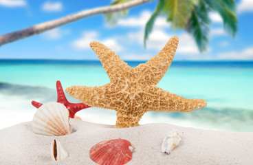sea shells and starfish with sand